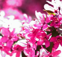 Pink Tree Blossom Sticker