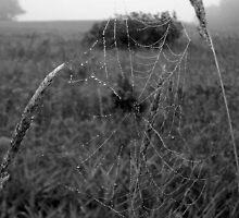 Black and White Web by babyangel