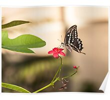 Butterfly on a red flower Poster