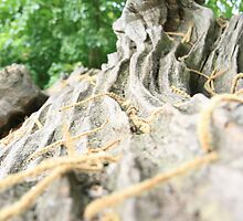 Tree trunk by Justine Humphries