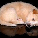 sleeping puppy by erikzhong