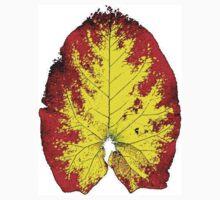 Leaf by mdohnalek