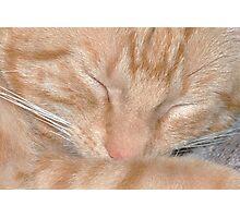 Sleeping Cutie Photographic Print