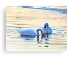 Swan Song (6022) Canvas Print