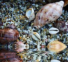 """Simply Shells"".. by debsphotos"