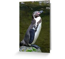 Penguin sunning himself. Greeting Card