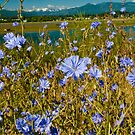 Wild Flowers by David Friederich