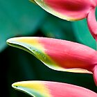 Tropical Tree  (Heliconia) by Nala