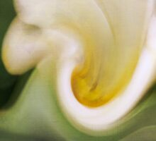 Tulip Twirl by JanetW
