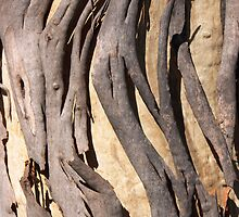 Eucalypt Bark by Blue Gum Pictures