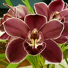 Orchid Show 1 by Trish Meyer