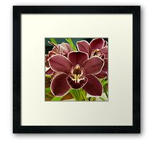 Orchid Show 1 Framed Print