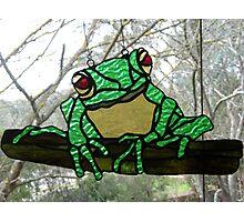 Red- Eyed Australian Tree Frog Photographic Print