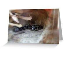 Broad-Headed Snake (hpolocephalus bungaroides) Greeting Card