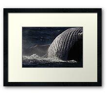 Whale Broaching #2 Framed Print