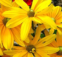 Bright Yellow Flowers by BethofArt