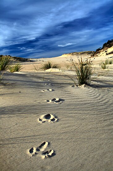 Emu Tracks 2. by Steve Chapple