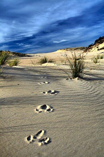 Emu Tracks 2. by Steve Chapple