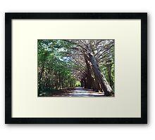 Coole Park forest Framed Print