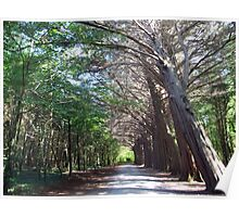 Coole Park forest Poster