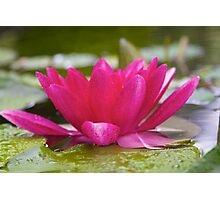 View From a Lily Pad Photographic Print