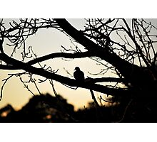 Bird On A Tree Photographic Print