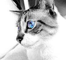 Cat with blue eyes by Susanne Schmitz