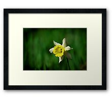 Ragged Beauty Framed Print