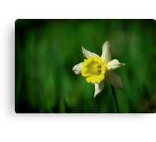 Ragged Beauty Canvas Print