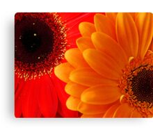 Bright... Canvas Print