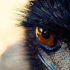 Old Man Emu by Belinda Fraser