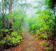 Start of the Trail... by Tracie Louise