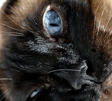 Funny Cat by egbphoto