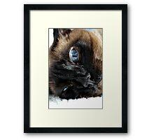Funny Cat Framed Print