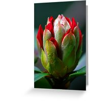 In Bud Greeting Card