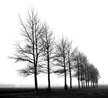 Trees in the Mist by MayDerry