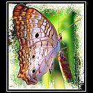 Oh Little Butterfly by glink