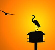 Egret Silhouette by Michael Mill