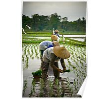 Rice Workers - Bali, Indonesia Poster