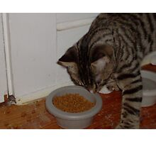 house cat eatin Photographic Print
