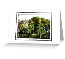 Amun Shea Young Photographers Series Greeting Card