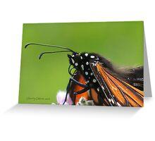 Monarch* @ Greeting Card