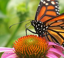 Portraite of A Monarch by ChereeCheree