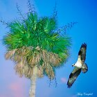 Soaring Past the Palm Tree by Mary Campbell