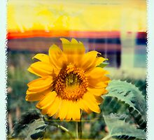 Sunflower Dreams by Reese Forbes
