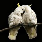 A Little Peck by Cathy Middleton
