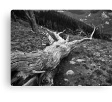 Nearly Desolate Canvas Print