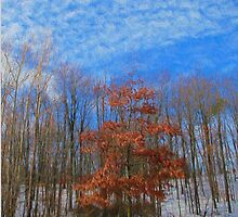 Afternoon in The Metro Park, OH by Photoplay5