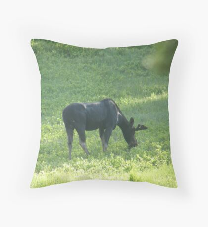 Grazing Moose Throw Pillow