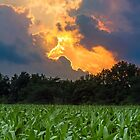 Sunset Cornfield by Kenneth Keifer
